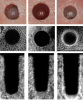 Fig 6. Results from a preclinical study demonstrating the ability of osseodensification burs to densify bone. Top row: surface view of 5.8 mm standard drilling (SD), extraction drilling (ED), and osseous densification (OD) osteotomies. Second and bottom rows: micro-computed tomography midsections and cross-sections, respectively. Note the layer of dense bone produced on the outer surface of the OD group. (Republished with permission of Quintessence Publishing Company Inc, from Huwais S, Meyer EG. <em>Int J Oral Maxillofac Implants</em>. 2017;32(1):27-36; permission conveyed through Copyright Clearance Center Inc)