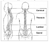 Fig. 1 The human spine in balanced posture. Used with permission from The Saunders Group, Inc